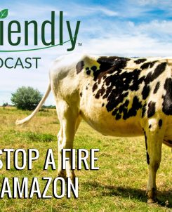 The Biofriendly Podcast - Episode 29 - How To Stop A Fire In The Amazon