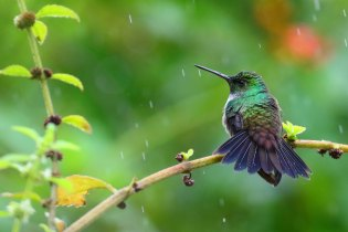 Hummingbird Break