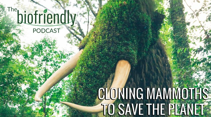 The Biofriendly Podcast - Episode 30 - Cloning Mammoths To Save The Planet