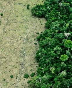 deforestation-from-air_1600