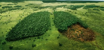 Deforestation: A Few Solutions That Can Change The Future