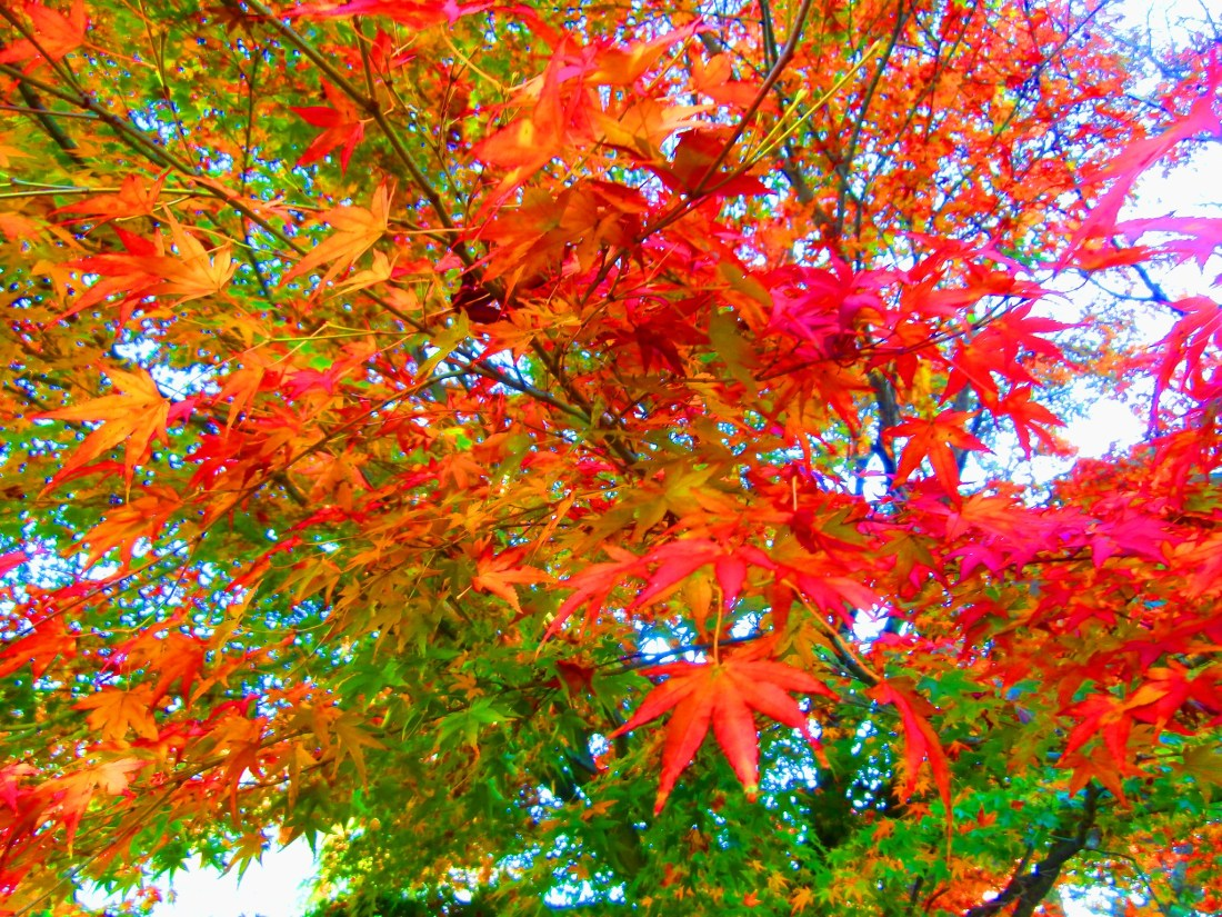 Changing colors