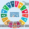 What Are The Sustainable Development Goals?
