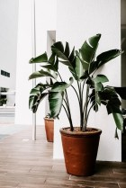Correlation Between Indoor Air Pollution and Plants