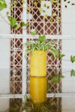 4 Air Purifying Plants for Your Apartment