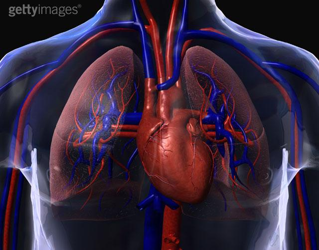heart_lungs2