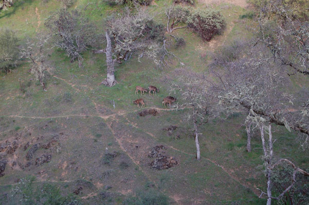 deer_trails1