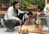 VJ Bani with Her Dogs