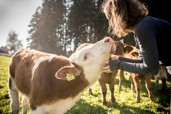 Streicheleinheiten für unsere Tiere