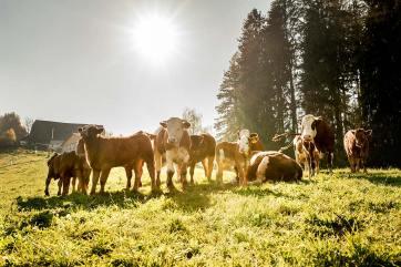 Unsere Tiere und die Landwirtschaft