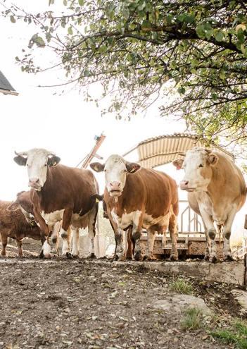 tiere-und-landwirtschaft-6