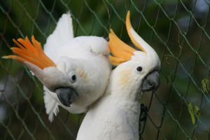 Pilih cat water based untuk sangkar burung yang terbukti keamanannya.