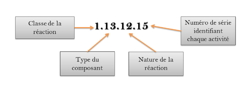 Description des quatre digits d'un EC number.  Image par l'auteur.