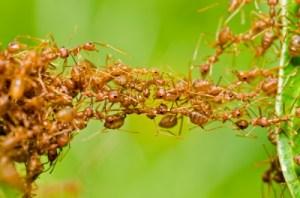 ants_team_work