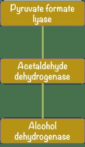 Réseau métabolique d'enzymes. Image par l'auteur