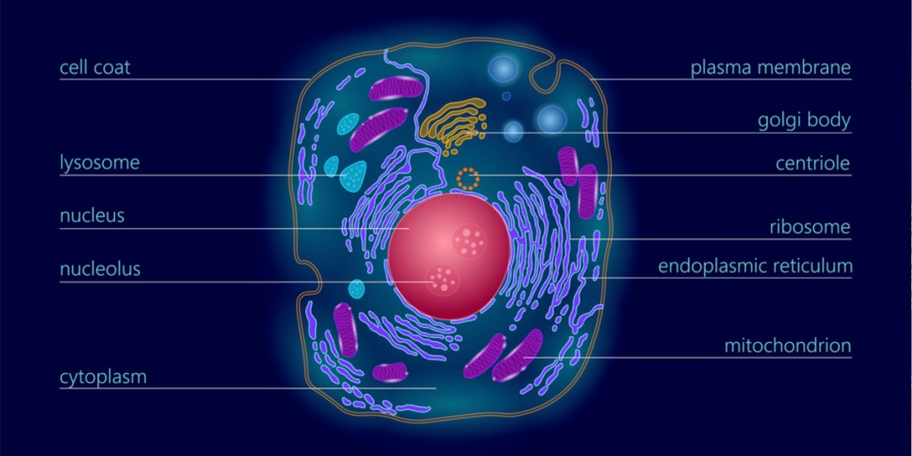 What are Exosomes?   Exosome Definition