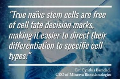 Minerva Bio - Naive Stem Cells