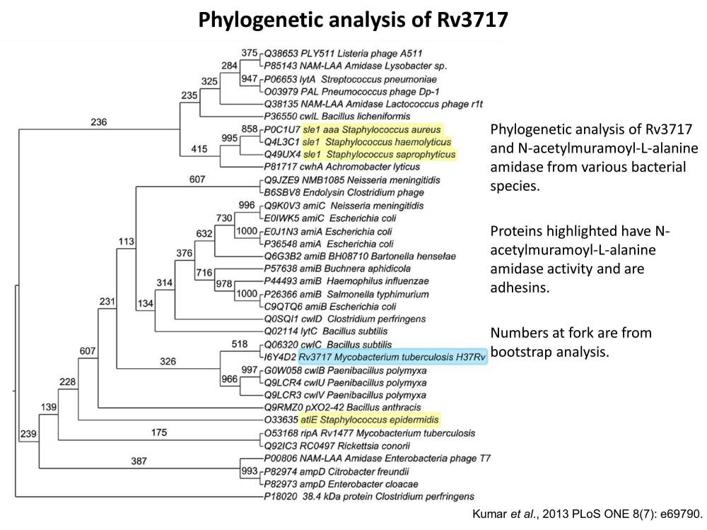 Functional Annotation of Hypothetical proteins (3/3)