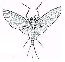 Insects: Mayflies (Ephemeroptera)