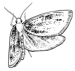 Insects: Butterflies & Moths (Lepidoptera)