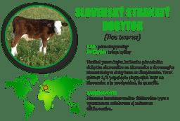 Slovenský strakaty dobytok