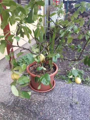 Citron uz vonku