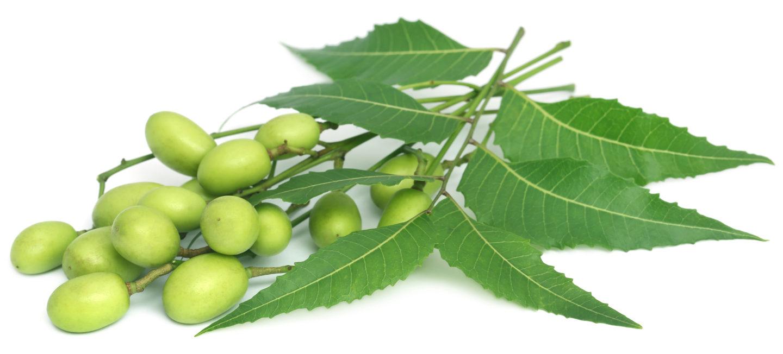 Nimbový olej : Všestranný vyživujúci olej