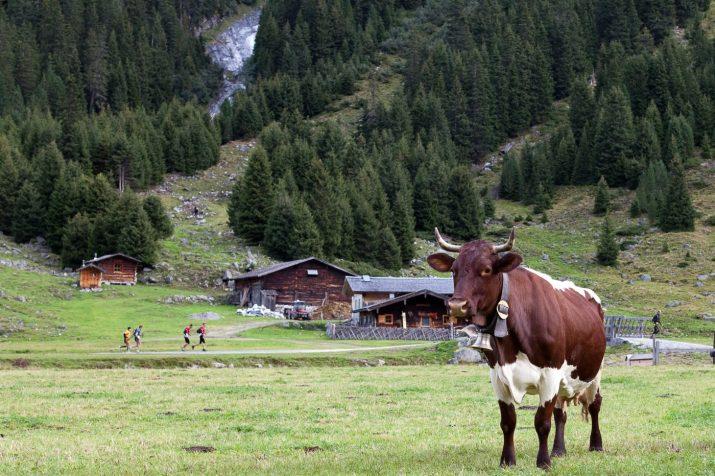 Alm ohne Weidevieh ist Wald oder Lawinenhang © Bio Austria