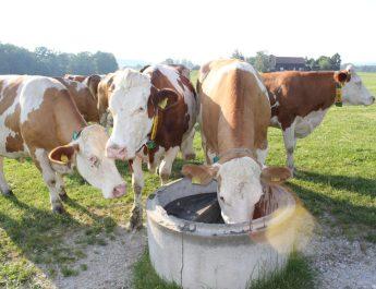 Weidetränke in Benützung © Bio Austria