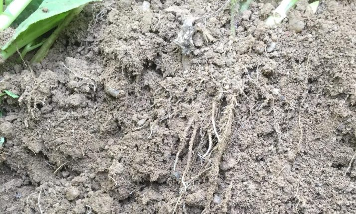 Feinwurzeln sind das Futter für Tonnen von Bodenlebewesen    © Markus Danner