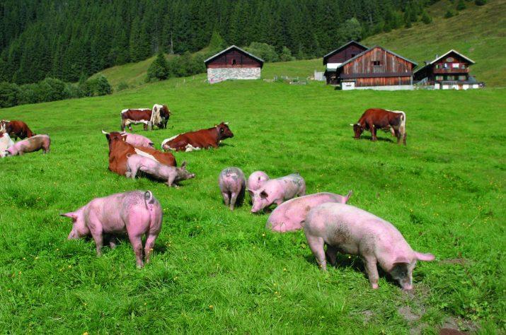 tierische Almidylle © Bio Austria