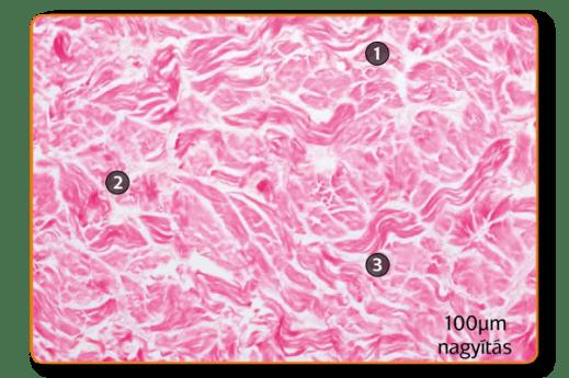 histology-novomatrix