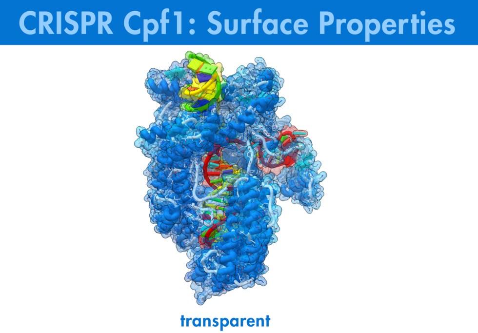 Biologic Animation, Biologic Models, CRISPR,Cpf1,