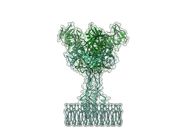 Ebola Virus, Ebola, Prefusion ectodomain, Casey Steffen, Biologic Models, Biologic Discovery, Protein model, molecule,