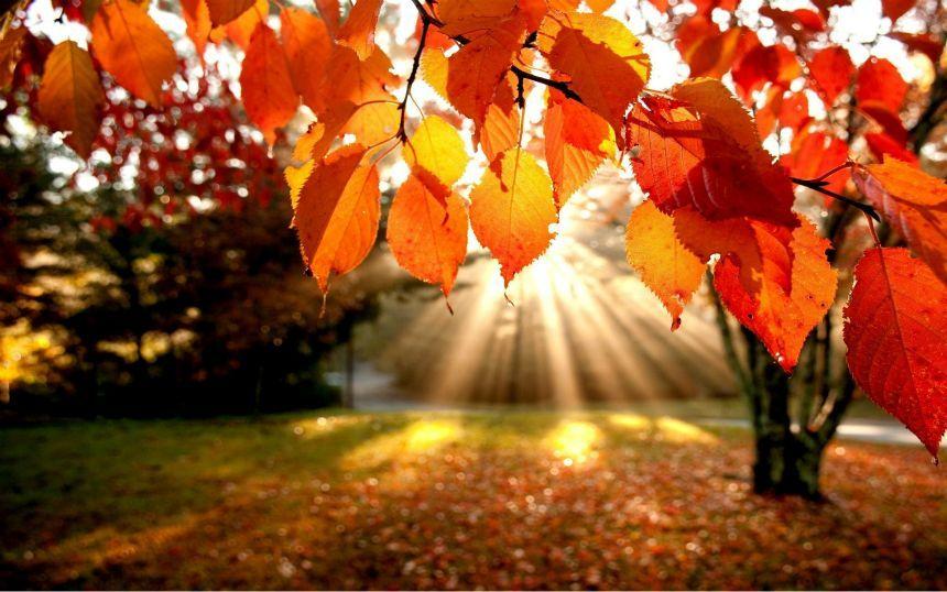 Da li znate zašto lišće menja boju?
