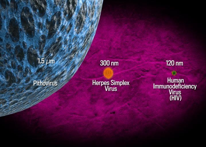 Гигантски вируси