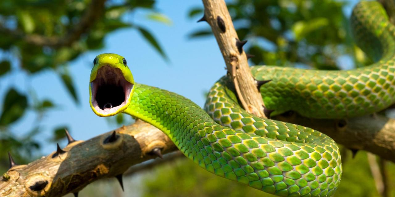 Како змије освајају копно, небо и водена пространства