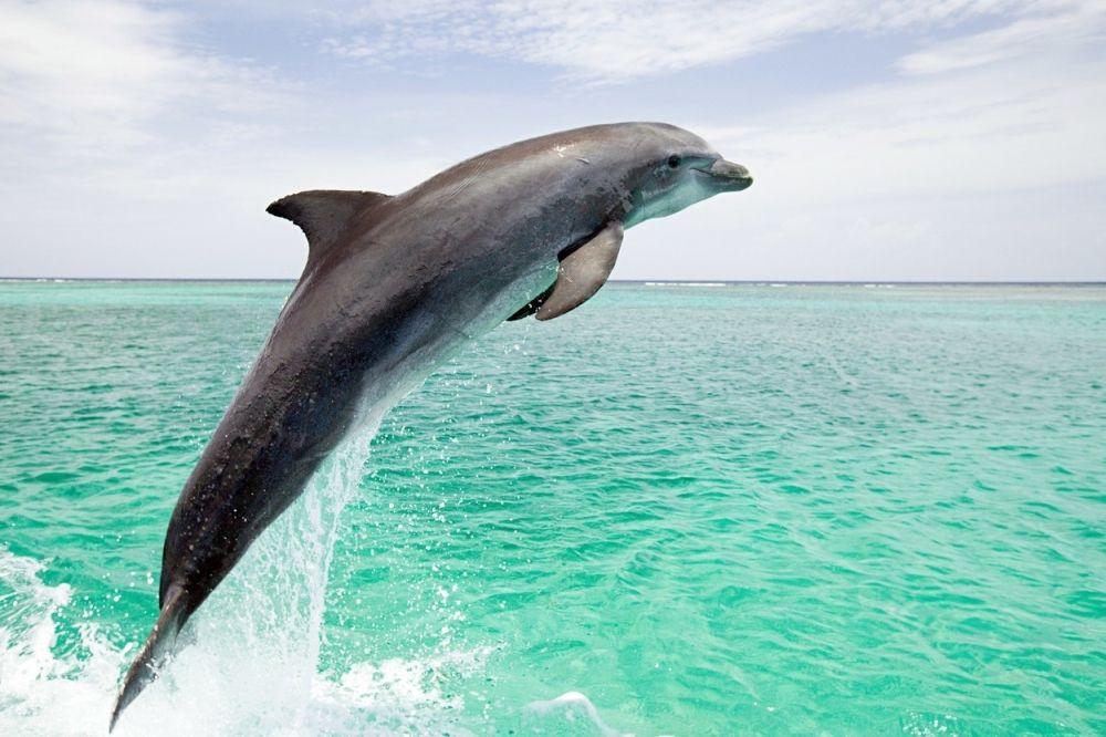 Делфини: интелигентни тимски играчи