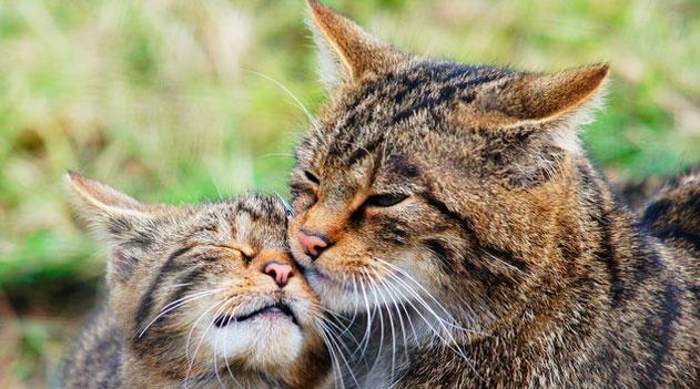 Nova pista da domesticação dos gatos