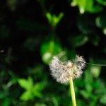 Documentário A Vida das Plantas