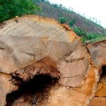 Amazônia Desconhecida