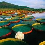 Documentário Pantanal