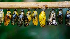 metamorfose - Biologia do desenvolvimento