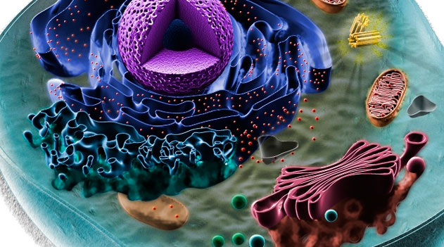 Documentário As Células - Célula