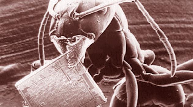 Vídeo Incríveis imagens de microscópio