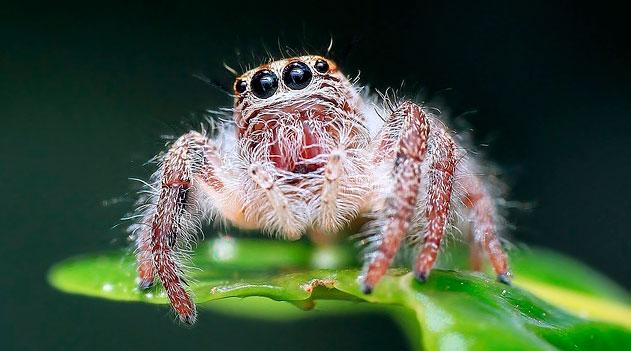 Visão - Olhos da aranha - Documentário Evolução dos olhos