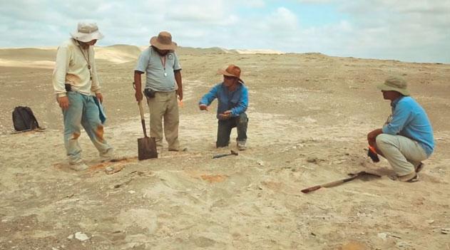 Expedição paleontológica