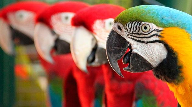 Ornitologia no Brasil:
