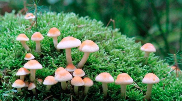 O Mundo Secreto dos Fungos