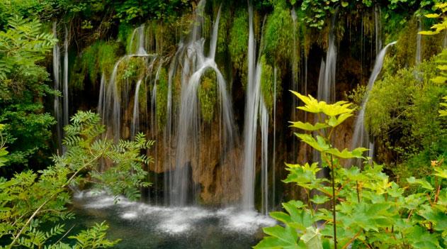 Importância das plantas - água